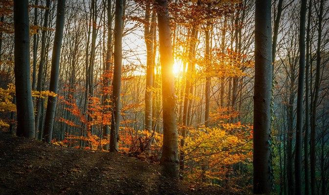 Autumn Forest Sunshine