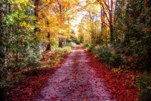 Red Autumn Road