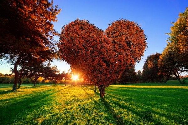 Heart Shaped Tree In Autumn