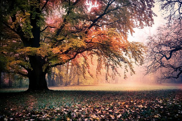 Autumn Tree Foliage