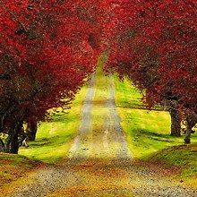 Autumn Tree Lined Road