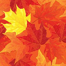 Maple Leaves Art