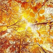 Autumn Trees Skylight