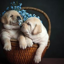 Two Cute Dogs