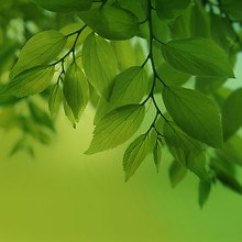 Leaves - Note Pro 12.2