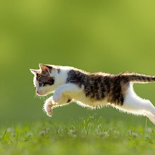 Cat Chases Butterfly