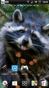 Raccoon live wallpaper