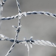 Frozen Barbed Wire