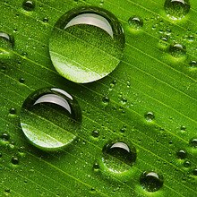 HD Leaf Water Droplets