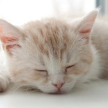 Cute Sleeping Cat
