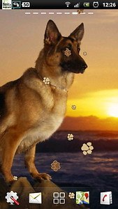 German Shepherd Dog LWP