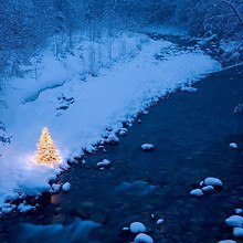 Christmas Tree By The River