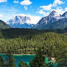 Dense Mountain Forest