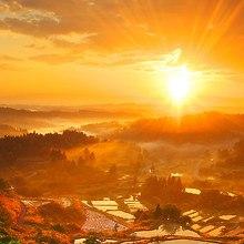 Autumn Sun LG G2