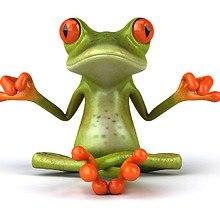 Springer Tree Frog