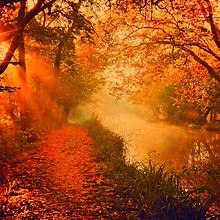 Orange Autumn River