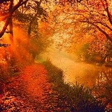 Orange Autumn River