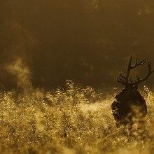Early Deer