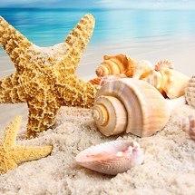 Shells & Starfish
