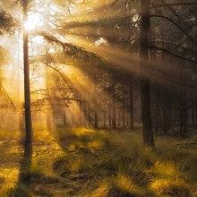 Netherlands Forest