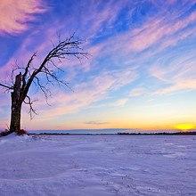Bare Tree Snow