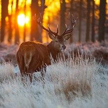 Deer Morning