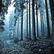 Deserted Forest