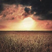 Crop Field Sunset