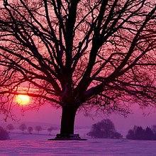 Tree Winter Sunset