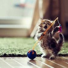 Funny Dancing Kitten