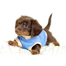 Cute Dog With Coat