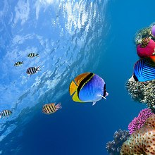 Tropical Marine Life