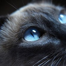 Beautiful Cat Eyes
