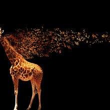 Audio Giraffe