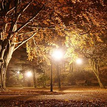 Autumn Park At Night