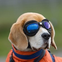 Funny Dog Wearing Goggles