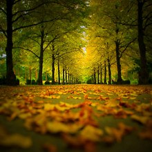 Tree Lined Road In Autumn