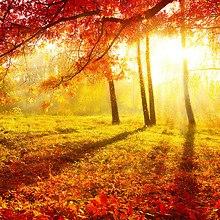 Brightness Of Autumn