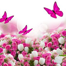 Pink Butterfly Tulips