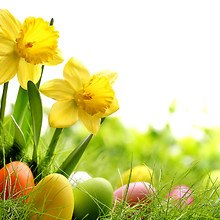 Easter Daffodils