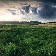 Field Rain