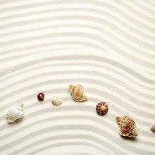 Combed Beach Shells