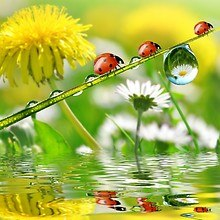 Natures Water