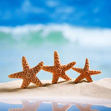Starfish Summer
