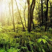 Washington Wood