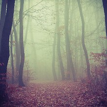 Forest Heavy Fog