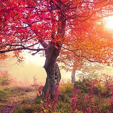 Beautiful Fall Scenery