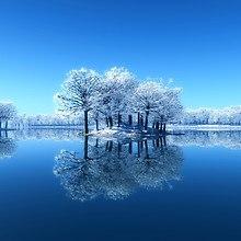 Frozen Trees On Lake