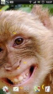 Free monkey live wallpaper