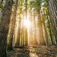 Hamaker Woods Oregon